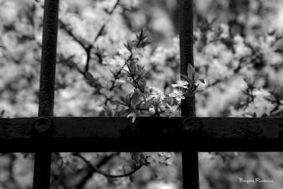 tree_20150326_blom