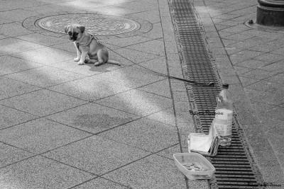 bw_20150410_puppybeggar1