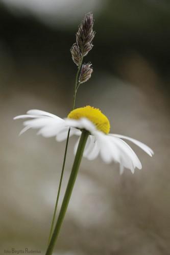 flower_20150628_straw