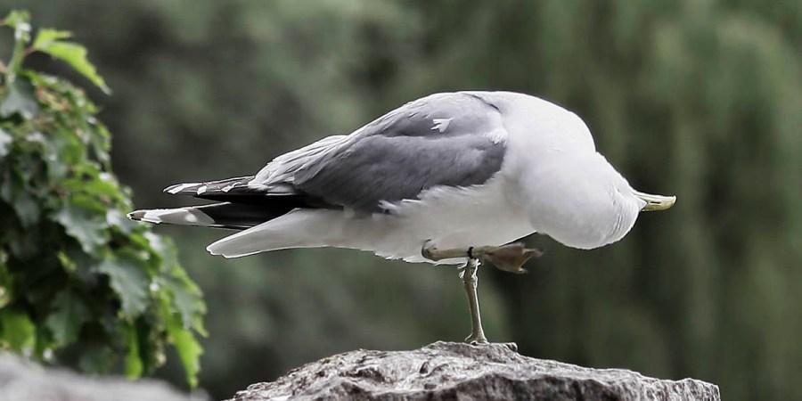 Bird - still wondering about ...