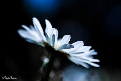 flower_20150612_alone