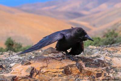 Fuerteventura - The Raven