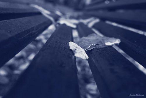 Blue Photo - Leaf