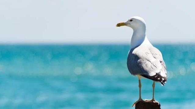 When the young woman bit the tongue of the man she fought, the seagull ate the piece