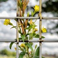 Bloemen en hek