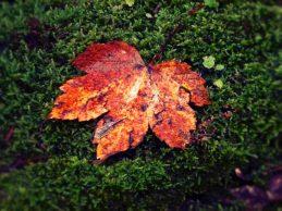 autunno-foglia-muschio-Autumnia-jpeg