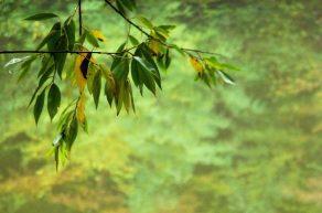 il-bosco-in-autunno-jpeg