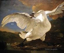 The threatened Swan by Jan Asselijn (1610-1652)