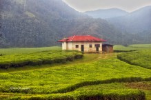 House, in the middle of tea plantation. Location: Rwanda
