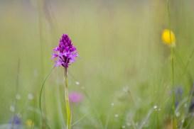 Unterwegs auf dem Orchideenpfad