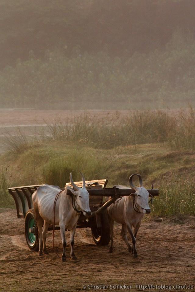Ochsenkarren Indien