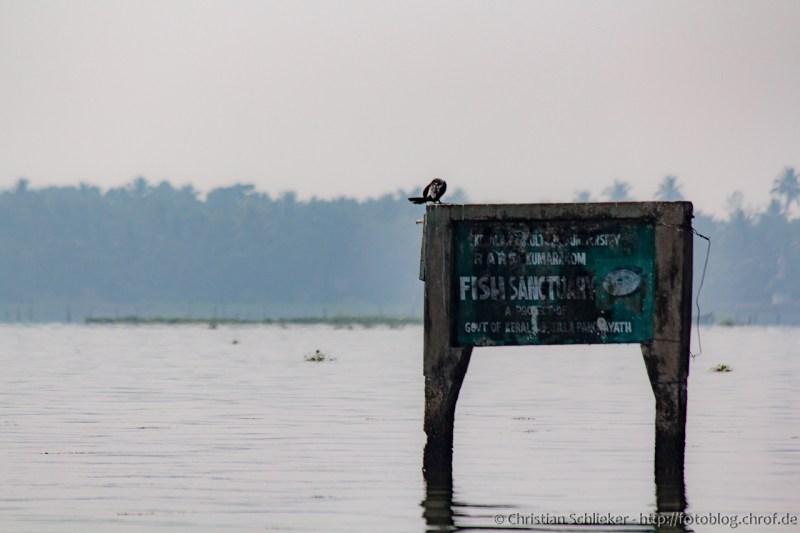 Backwaters Fischschutz