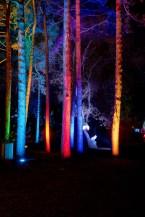 Bild von Adalbert - Winterlichter im Palmengarten