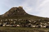 Cetatea Coltesti (Trascaului), Torocko