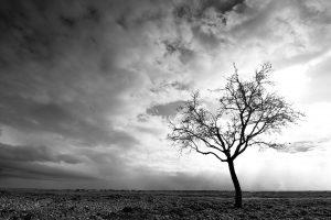 fotografia paisaje, luz de almendro