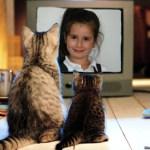 Fotomontajes de animales