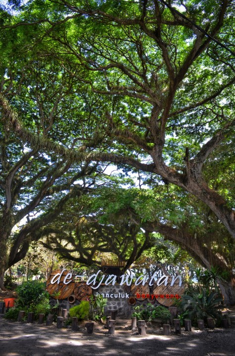 hutan de djawatan benculuk banyuwangi