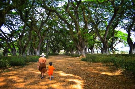 hutan de djawatan landscape