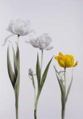 08-tulpen-3_c