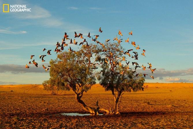 Un árbol soñando, desierto de Strezlecki (Australia)