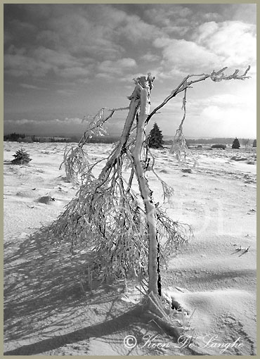 winter-05-z-w