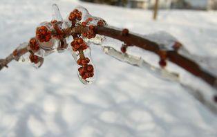 frozen new life