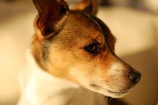 light-dog