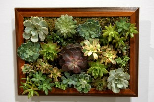 succulents in a picture frame
