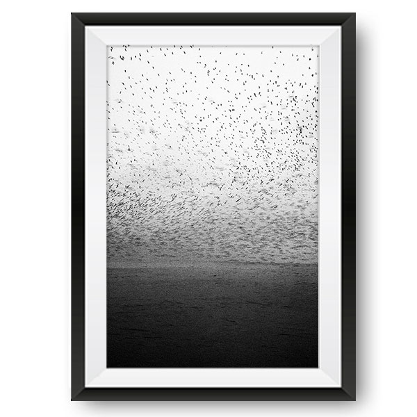 Birds Limited Edition Print by Sera Dzneladze