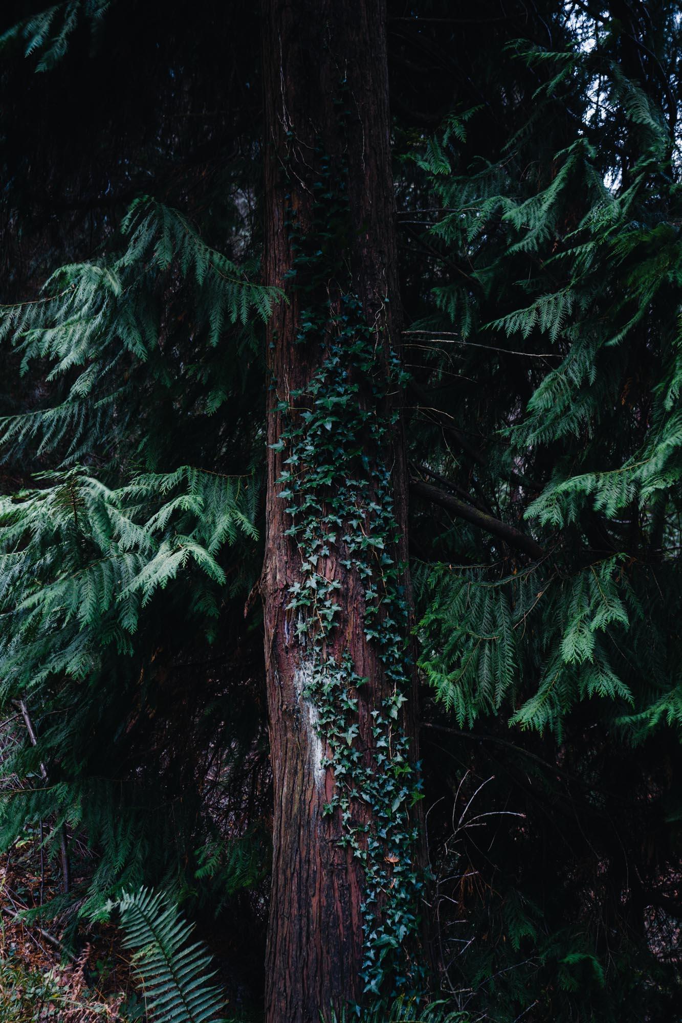 Arbol en bosque - Linzex