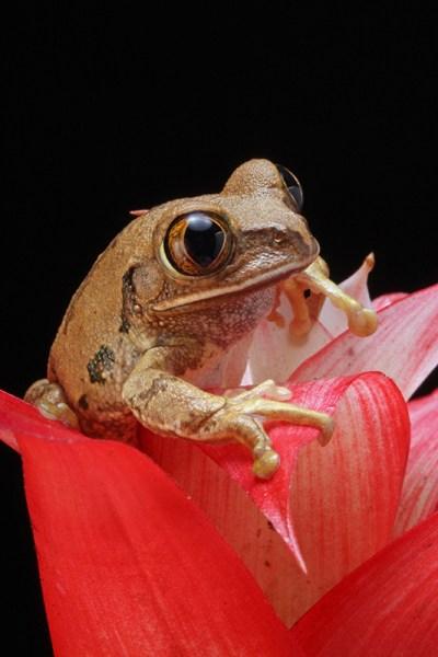 imparare fotografia macro obiettivi macro foto animali piccoli