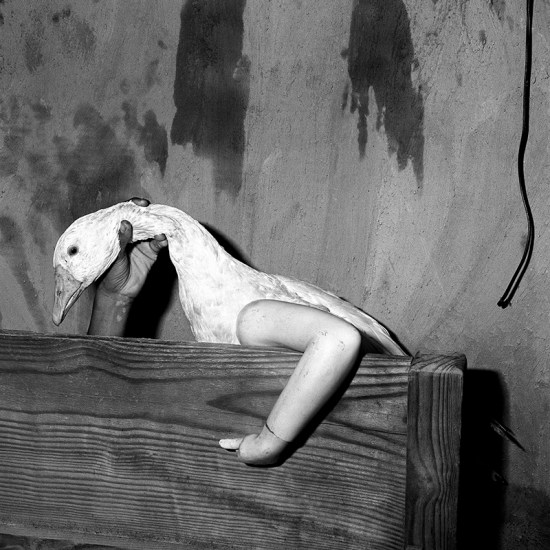Roger Ballen animali e umano fotografia fotografie