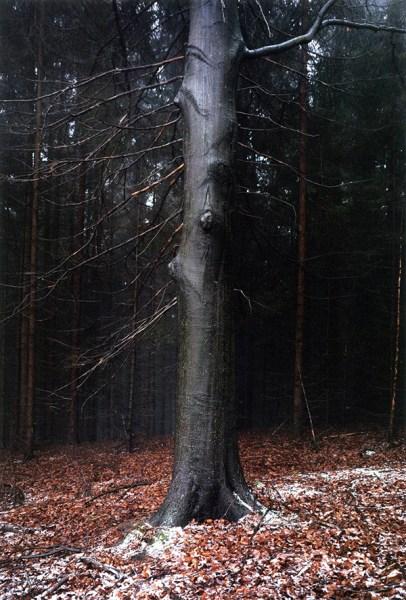 Jitka Hanzlová foto albero serie Forest