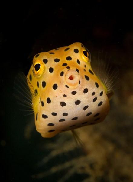 macrofotografia subacquea