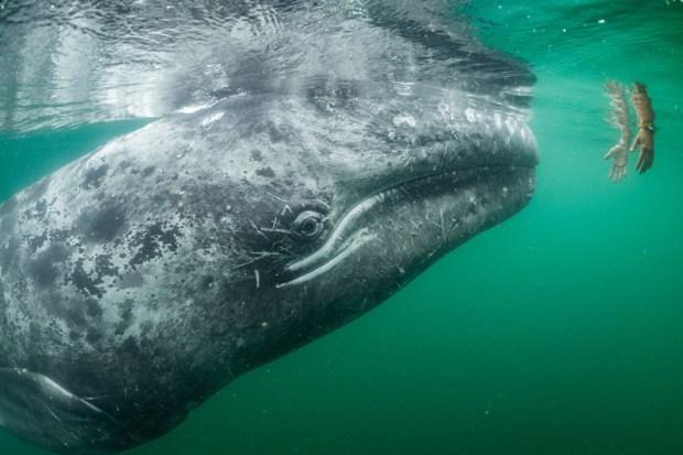 fotografia balena natura piu belle immagini