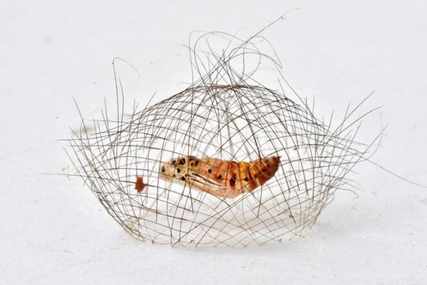 fotografia di insetti fotografia macro natura