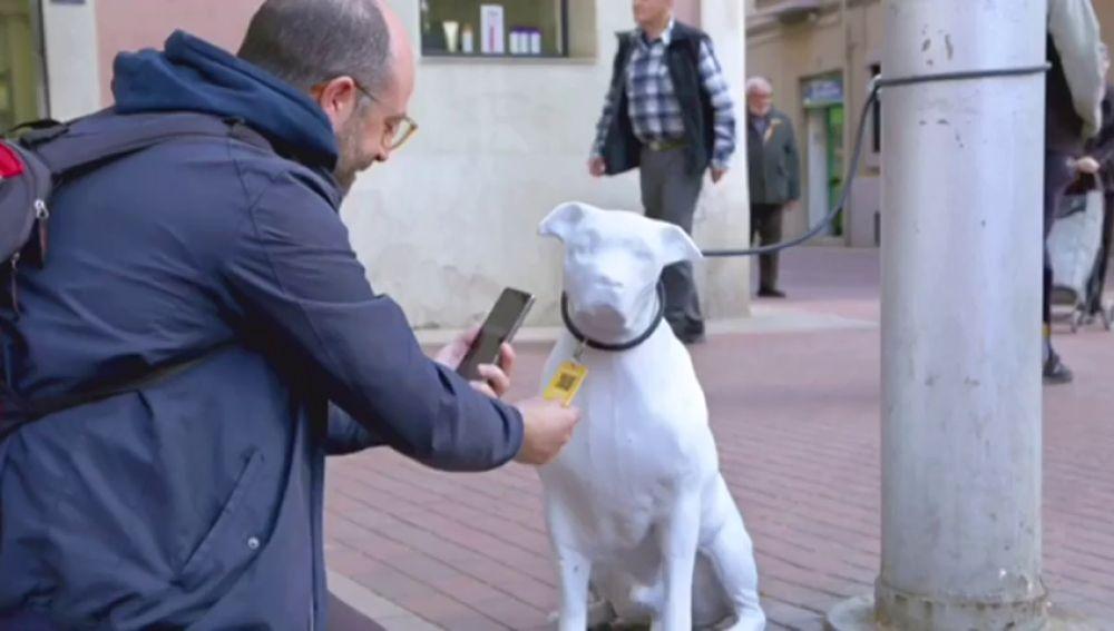 Resultado de imagen de perros hormigon barcelona