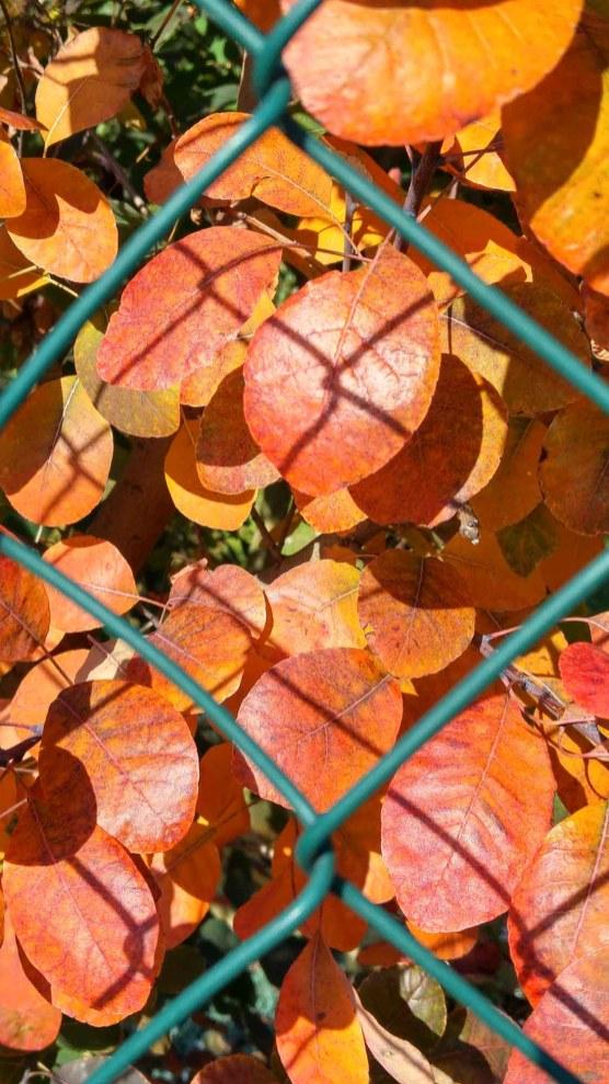 Herbst an der Mosel