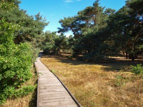 Schwanheimer Düne - nur auf dem Bohlenweg zu betreten