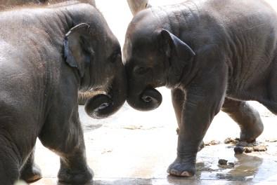 07 06 Zoo Köln 203