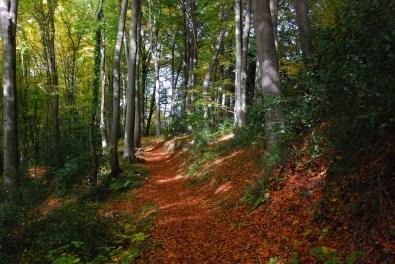 Hexenroute Herbstwald wunderbar