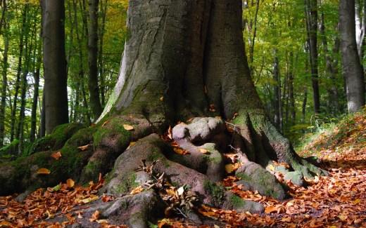 Die Hexenroute - Baumfuß
