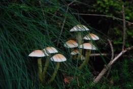Hexenroute Pilzsaison