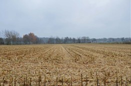 Maisfelder