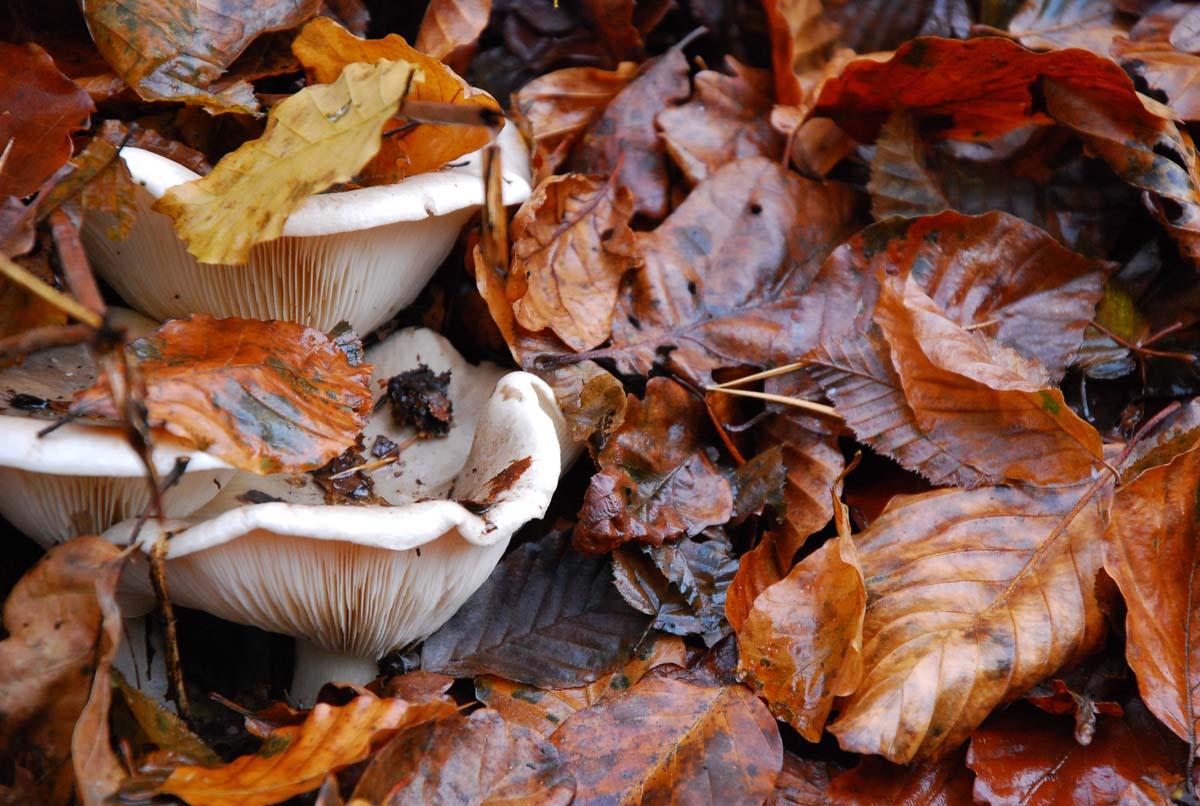 Pilze und Laub auf den Traumpfade an der Wupper