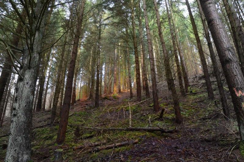Einblicke-in-Wald