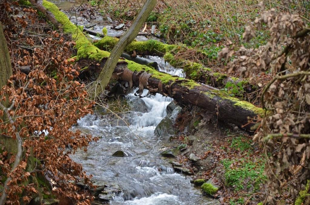 Wassersuchtsichseinen Weg
