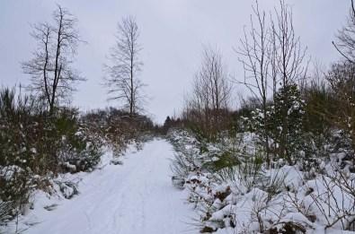 Eifgenbachwanderung im Schnee