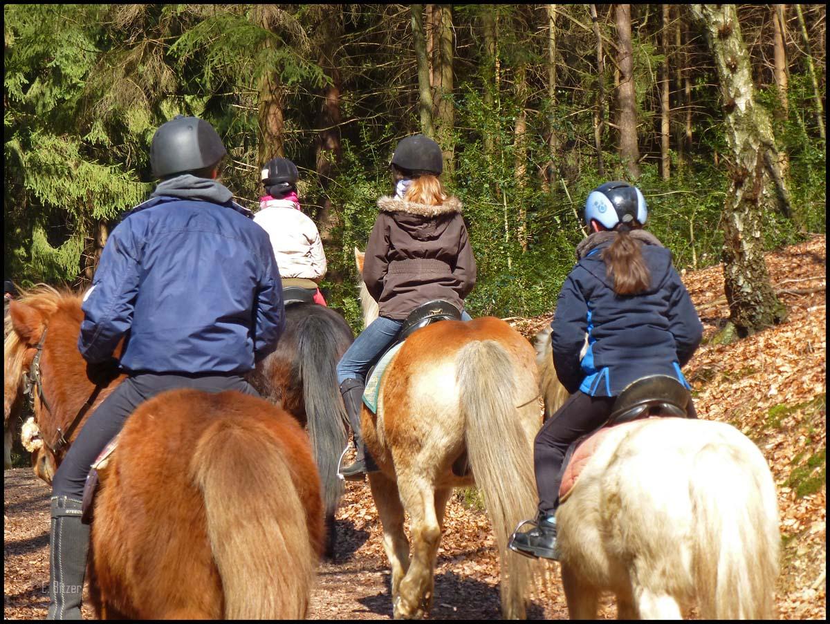 Kleine Reiter auf großen Pferden