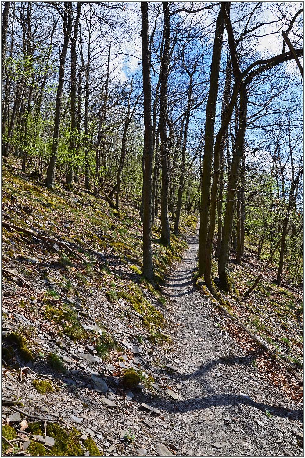 Auf schmalen Pfaden geht es durch den noch lichten Wald hinauf